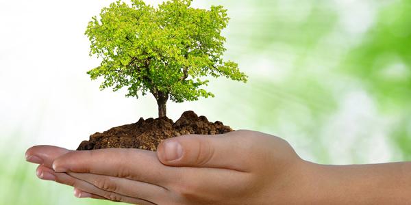 Cuidado del medio ambiente en tu fraccionamiento blog for 5 cuidados del suelo