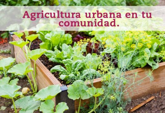 Agricultura urbana en tu comunidad