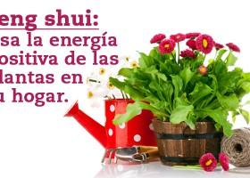 Feng Shui:Usa la energía positiva de las plantas en tu hogar