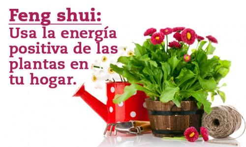 Feng shui usa la energ a positiva de las plantas en tu for Feng shui de la casa