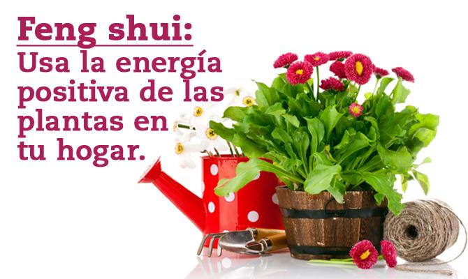 Feng shui usa la energ a positiva de las plantas en tu for Plantas en el hogar