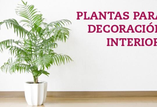 Plantas para decoración interior