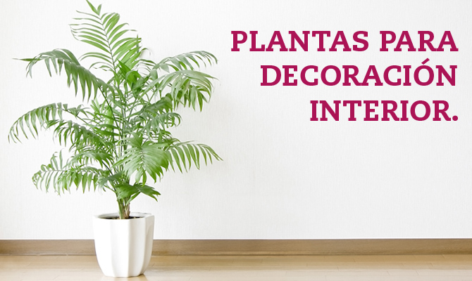 Plantas para decoraci n interior blog oficial de grupo for Decoracion de casas con plantas de interior