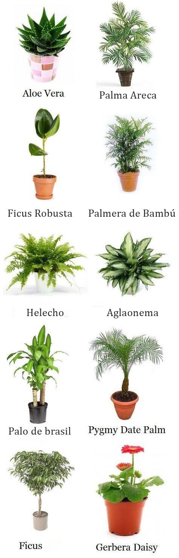 publicación-de-jardinería