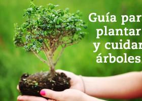 Guía para plantar árboles