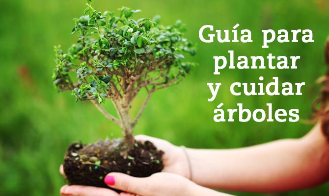 Gu a para plantar rboles blog oficial de grupo san for Tipos de arboles para plantar en casa