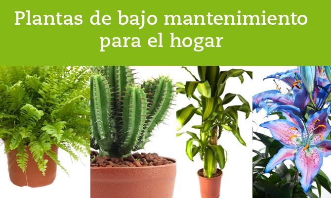 plantas-bajo-mantenimiento