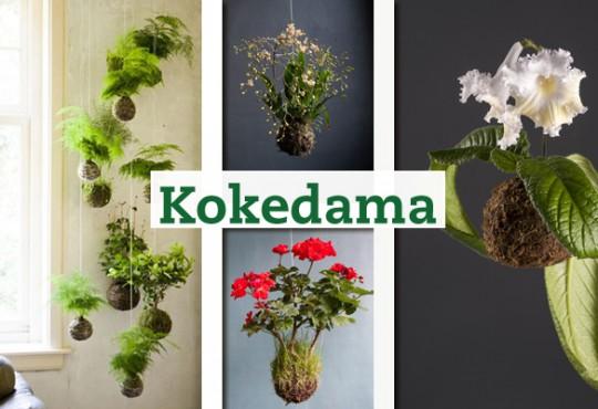 Kokedama, la técnica de los jardines suspendidos