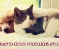 ¿Es bueno tener mascotas en casa?