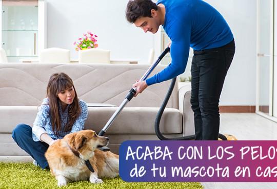 Acaba con los pelos de tu mascota en casa