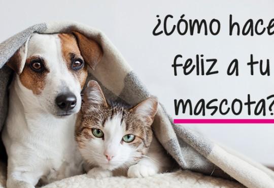 ¿Cómo hacer feliz a tu mascota?